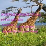 TRAVEL TANZANIA NATIONAL PARKS FOR ONLY 180$ PER DAY